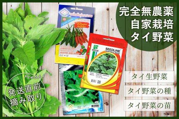 自家栽培タイ野菜
