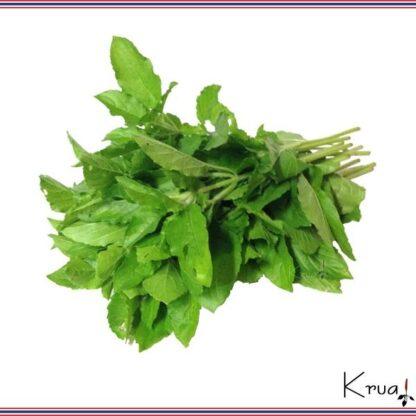 ホーリーバジルの葉 バイガパオ 100g 自家栽培 タイハーブ 千葉県産